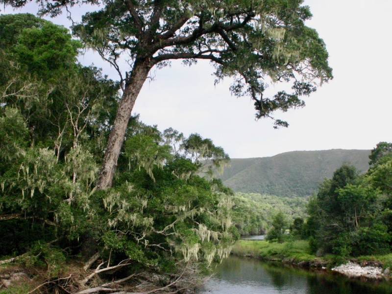 Learning from Knysna Forest