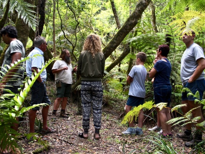 Secrets of the Knysna Forest
